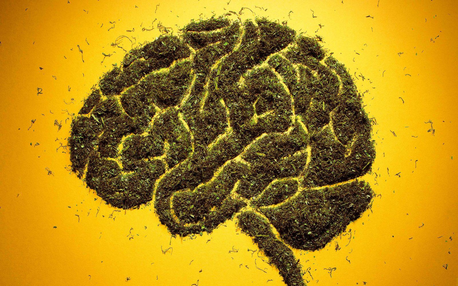 Efectos de la Marihuana a corto y largo plazo